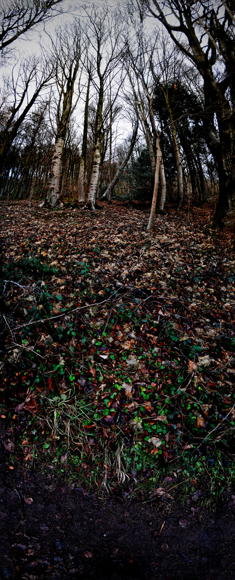 Vertical Panorama by Will Carey