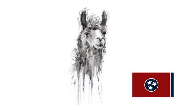 https://creativechair.org/wp-content/uploads/2019/06/Kristin-Llamas-Tennessee.jpg
